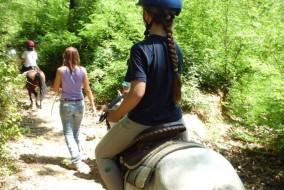 Remuda_cavallo
