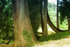 Giardino_Parco_Rocca_Bernarda_Premariacco1