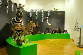 Civico_Museo_Storia_Naturale_Trieste