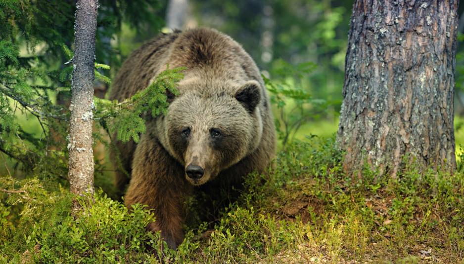 Scopri fvg portale del turismo in friuli venezia giulia for Cabine marine di grandi orsi