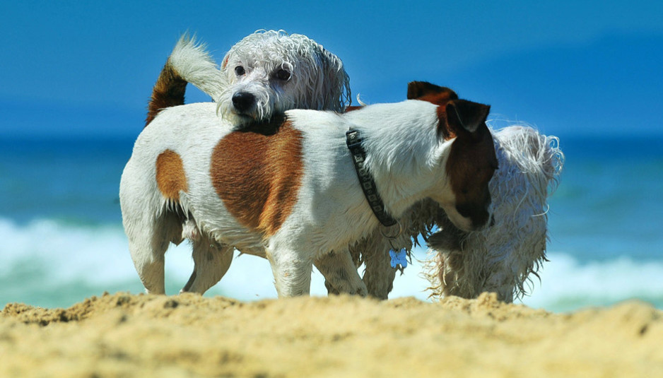 Spiaggia_di_Snoopy